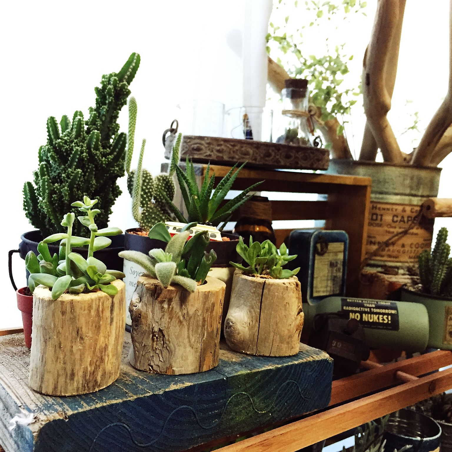 エアプランツなどの観葉植物の飾り方 | diyer(s)